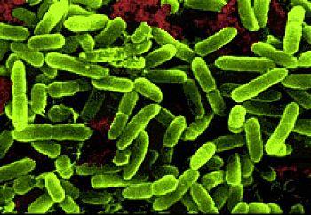 Пробиотиците понижават риска от диабет