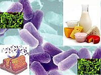 Пребиотици и пробиотици
